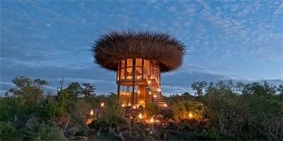 """肯尼亚建世界上首个五星级的""""鸟巢酒店"""" 无死角观美景"""